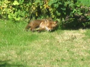 Foxy spots Phalanx on a counter-espionage sweep.